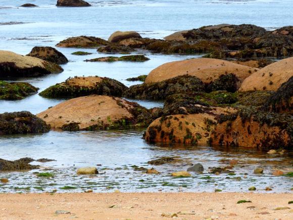http://photographic-garden.cowblog.fr/images/P1030568.jpg